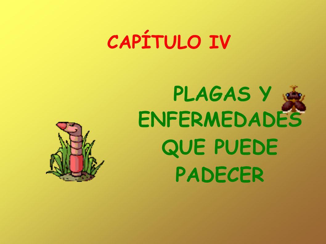 CAPÍTULO IV PLAGAS Y ENFERMEDADES QUE PUEDE PADECER