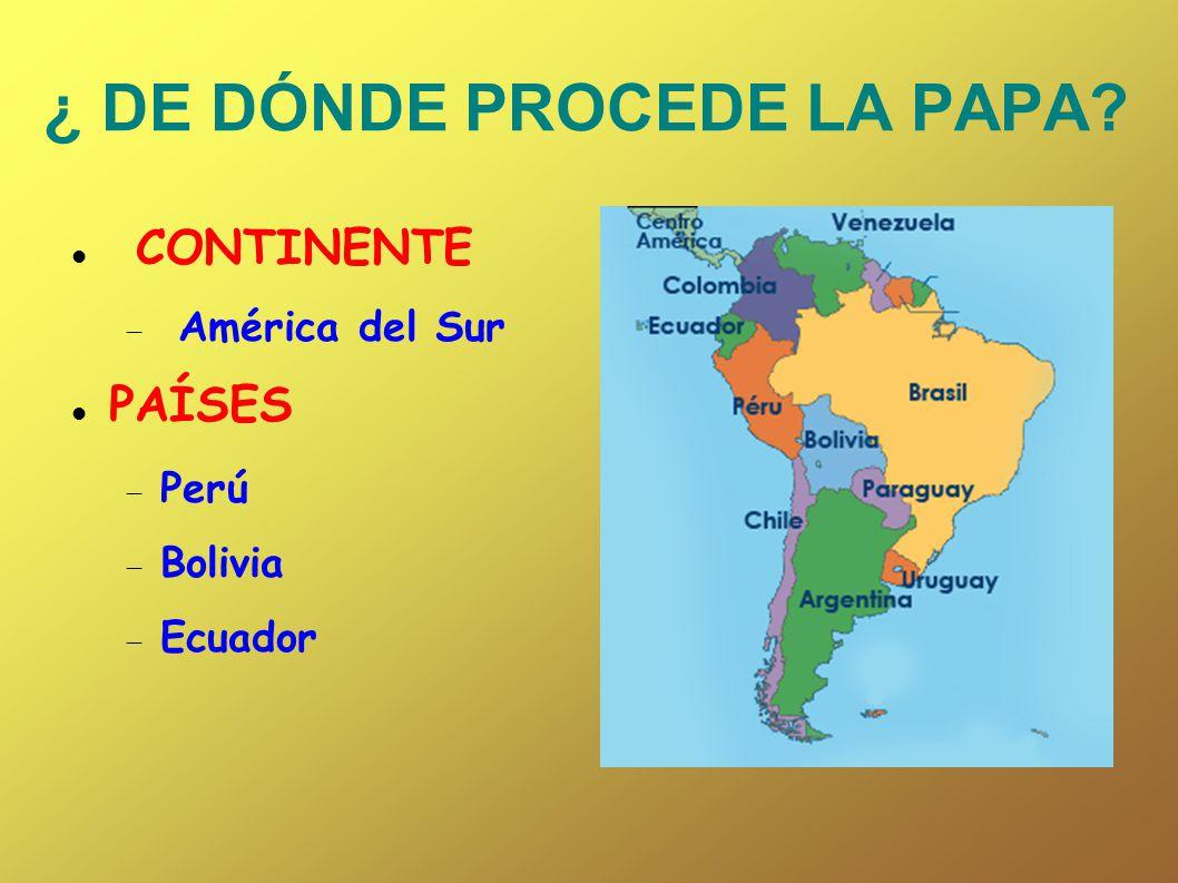 ¿ DE DÓNDE PROCEDE LA PAPA? CONTINENTE América del Sur PAÍSES Perú Bolivia Ecuador