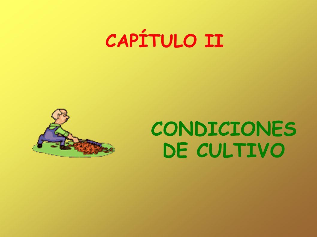 CAPÍTULO II CONDICIONES DE CULTIVO