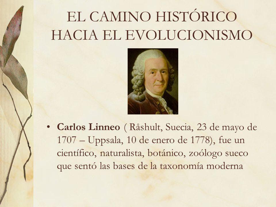 EL CAMINO HISTÓRICO HACIA EL EVOLUCIONISMO Carlos Linneo ( Råshult, Suecia, 23 de mayo de 1707 – Uppsala, 10 de enero de 1778), fue un científico, nat