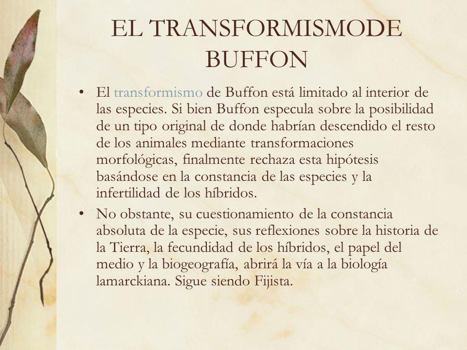 EL TRANSFORMISMODE BUFFON El transformismo de Buffon está limitado al interior de las especies. Si bien Buffon especula sobre la posibilidad de un tip