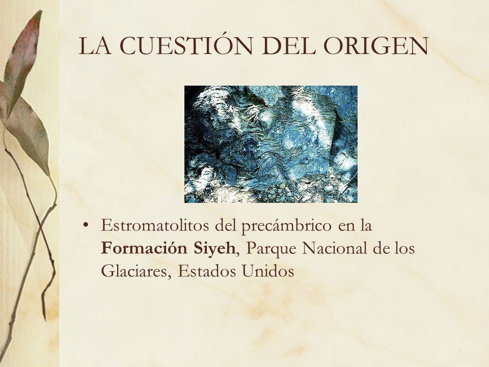 CREACIONISMO Existe un tipo especial de Creacionismo pro- evolución que cree en la existencia de un creador y un propósito, pero sí acepta que los seres vivos se han formado a través de un proceso de evolución natural.