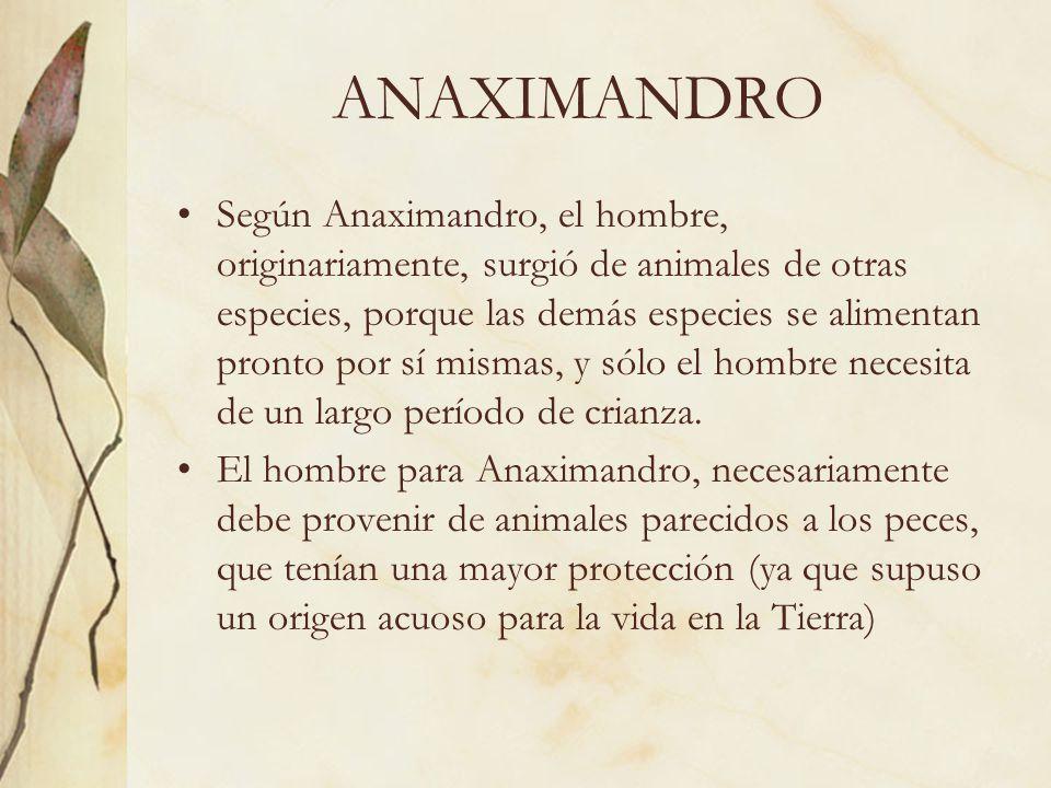 ANAXIMANDRO Según Anaximandro, el hombre, originariamente, surgió de animales de otras especies, porque las demás especies se alimentan pronto por sí
