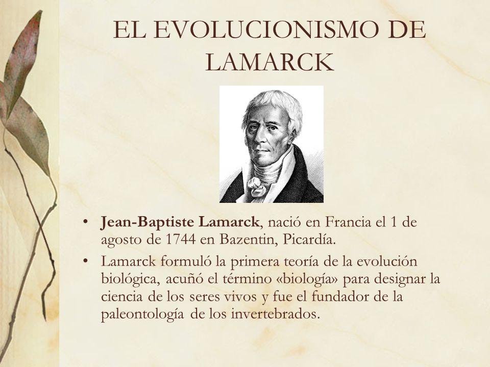 EL EVOLUCIONISMO DE LAMARCK Jean-Baptiste Lamarck, nació en Francia el 1 de agosto de 1744 en Bazentin, Picardía. Lamarck formuló la primera teoría de