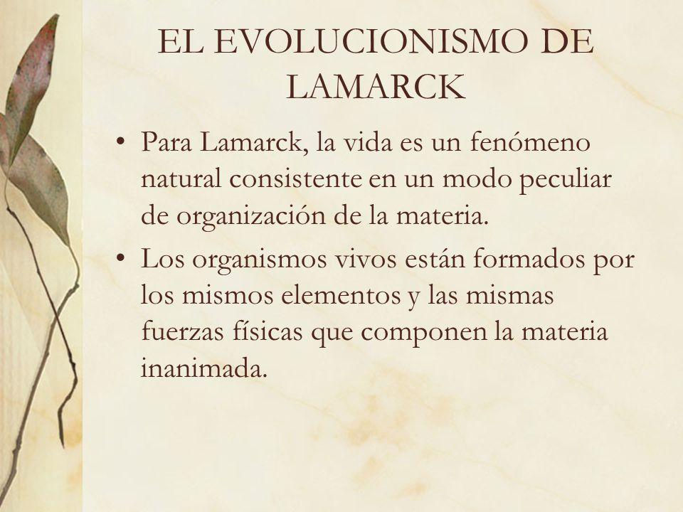 EL EVOLUCIONISMO DE LAMARCK Para Lamarck, la vida es un fenómeno natural consistente en un modo peculiar de organización de la materia. Los organismos