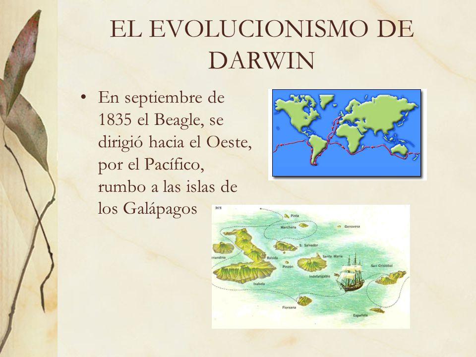 EL EVOLUCIONISMO DE DARWIN En septiembre de 1835 el Beagle, se dirigió hacia el Oeste, por el Pacífico, rumbo a las islas de los Galápagos