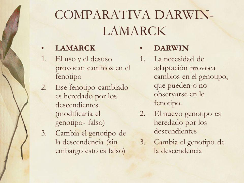 COMPARATIVA DARWIN- LAMARCK LAMARCK 1.El uso y el desuso provocan cambios en el fenotipo 2.Ese fenotipo cambiado es heredado por los descendientes (mo