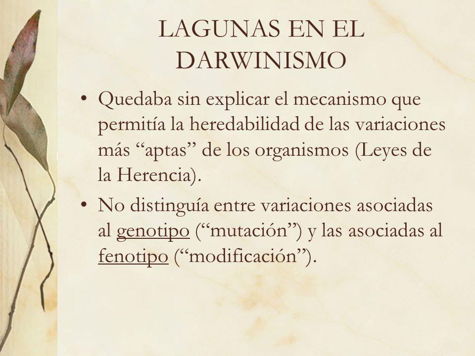 LAGUNAS EN EL DARWINISMO Quedaba sin explicar el mecanismo que permitía la heredabilidad de las variaciones más aptas de los organismos (Leyes de la H