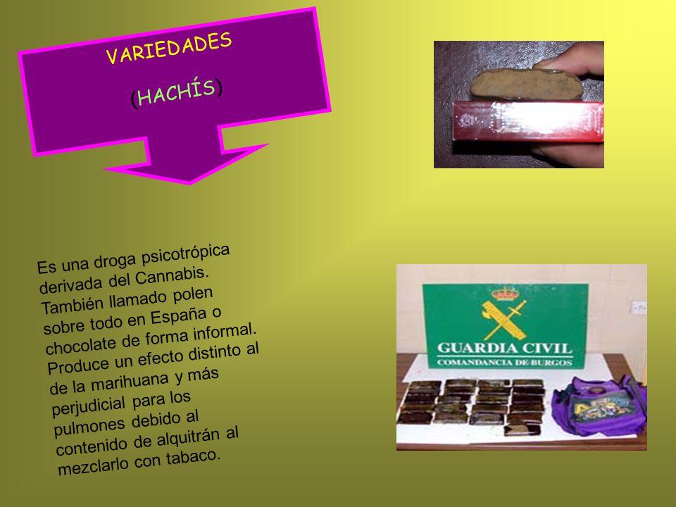 VARIEDADES (HACHÍS) Es una droga psicotrópica derivada del Cannabis.