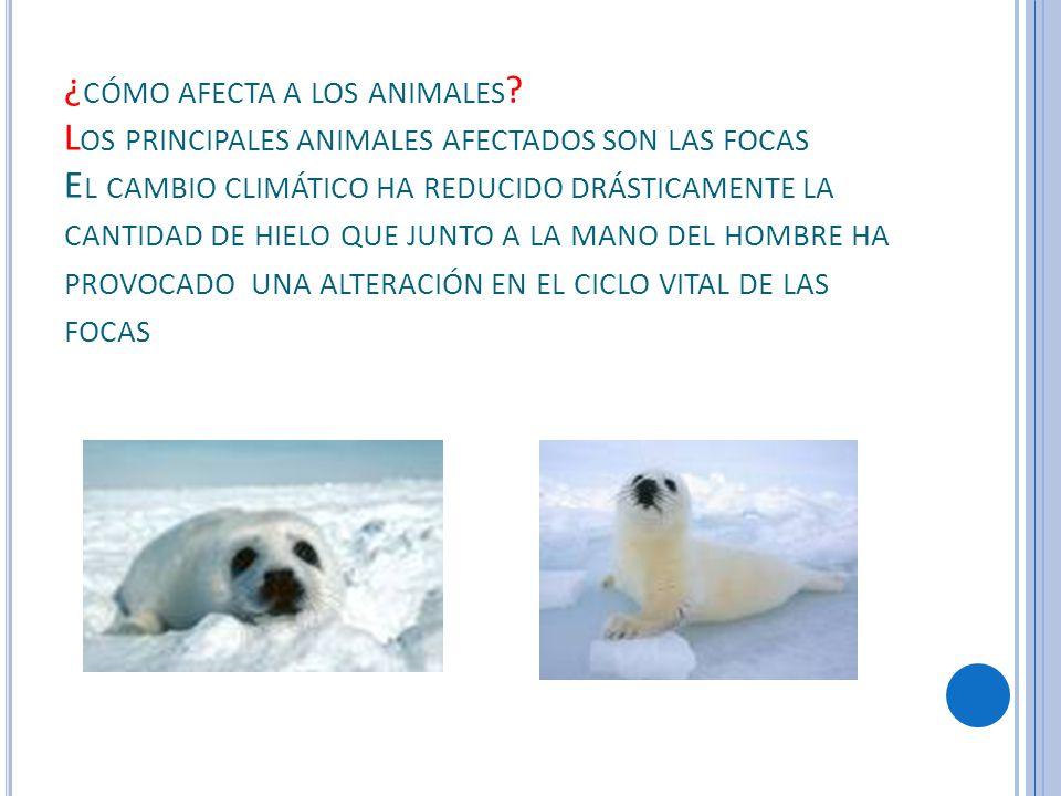 ¿ CÓMO AFECTA A LOS ANIMALES .