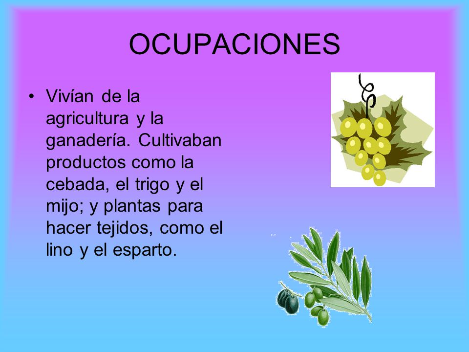 OCUPACIONES Vivían de la agricultura y la ganadería. Cultivaban productos como la cebada, el trigo y el mijo; y plantas para hacer tejidos, como el li
