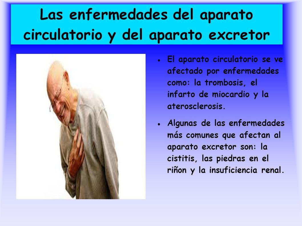 Las enfermedades del aparato circulatorio y del aparato excretor El aparato circulatorio se ve afectado por enfermedades como: la trombosis, el infart