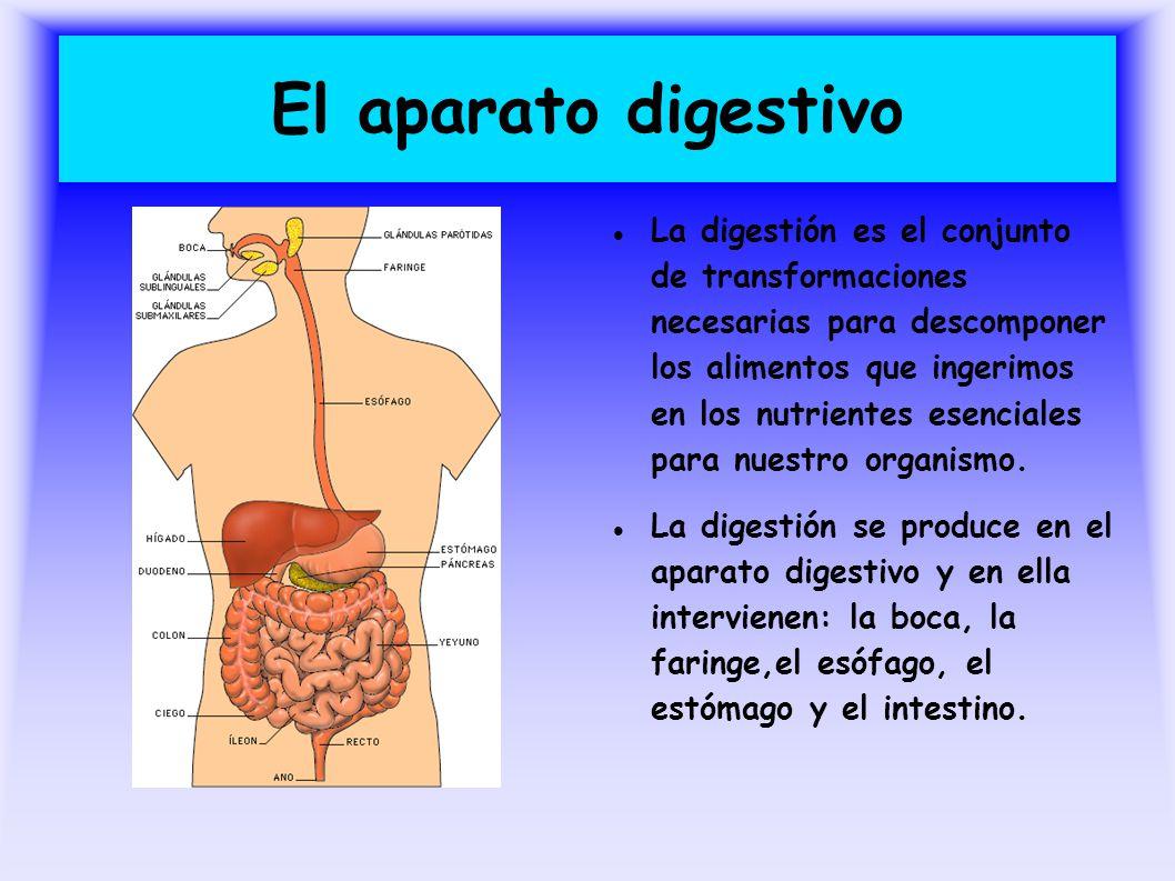 El aparato digestivo La digestión es el conjunto de transformaciones necesarias para descomponer los alimentos que ingerimos en los nutrientes esencia