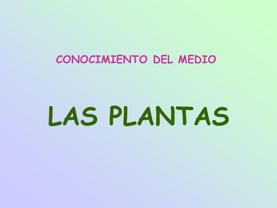 CONOCIMIENTO DEL MEDIO LAS PLANTAS