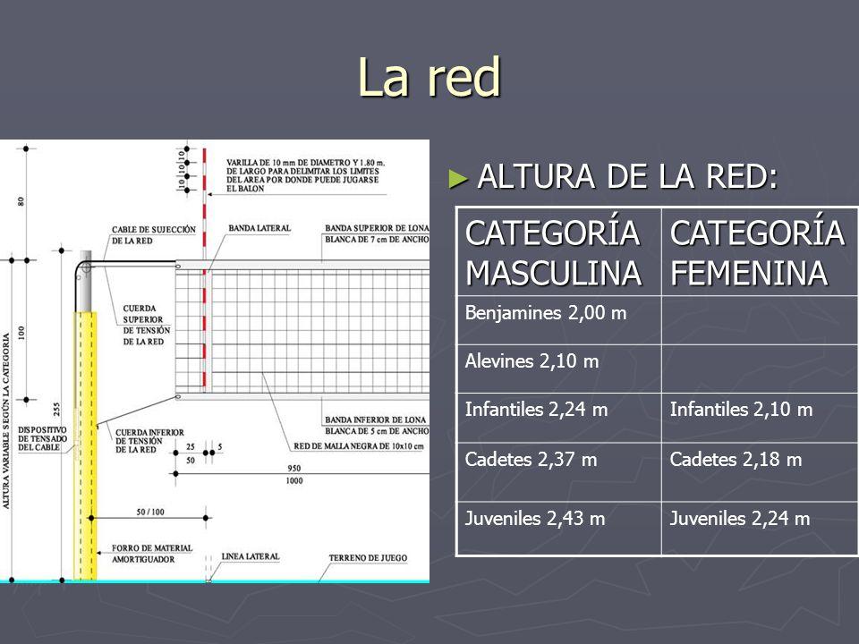 La red ALTURA DE LA RED: CATEGORÍA MASCULINA CATEGORÍA FEMENINA Benjamines 2,00 m Alevines 2,10 m Infantiles 2,24 mInfantiles 2,10 m Cadetes 2,37 mCad