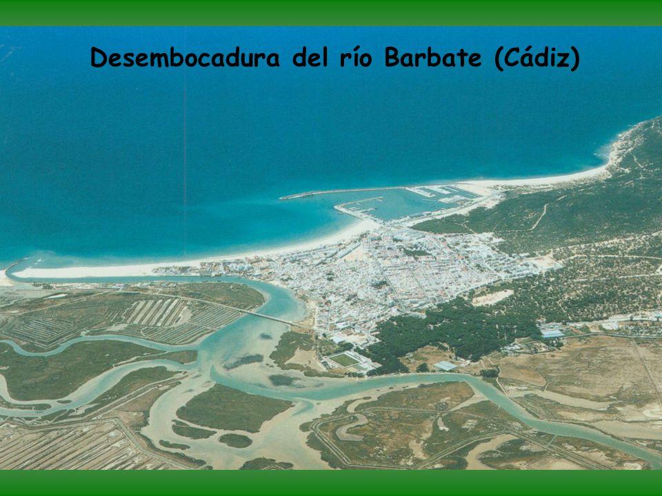 Acantilados de Caños de Meca (Cádiz), entre El Palmar y Barbate