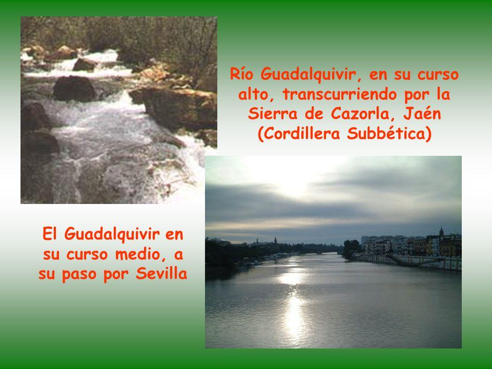 Río Guadalquivir, en su curso alto, transcurriendo por la Sierra de Cazorla, Jaén (Cordillera Subbética) El Guadalquivir en su curso medio, a su paso por Sevilla