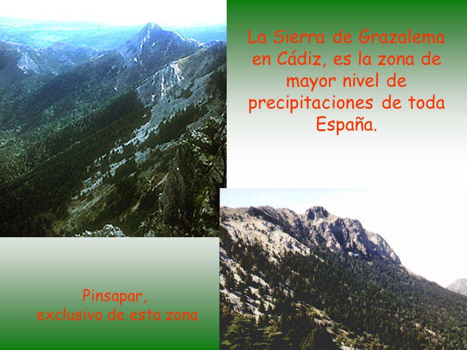 La Sierra de Grazalema en Cádiz, es la zona de mayor nivel de precipitaciones de toda España.