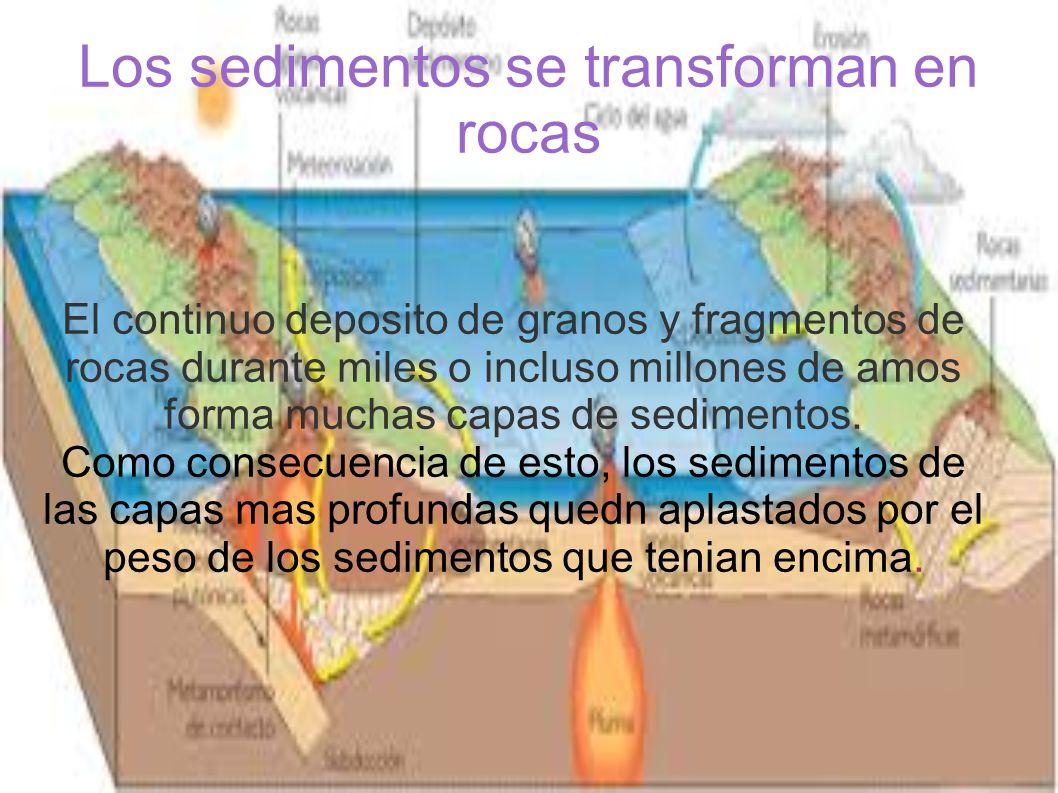 Los sedimentos se transforman en rocas El continuo deposito de granos y fragmentos de rocas durante miles o incluso millones de amos forma muchas capas de sedimentos.