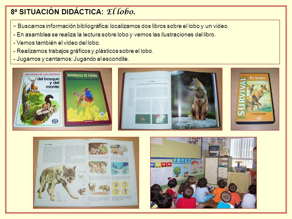 8ª SITUACIÓN DIDÁCTICA: El lobo. - Buscamos información bibliográfica: localizamos dos libros sobre el lobo y un video. - En asamblea se realiza la le