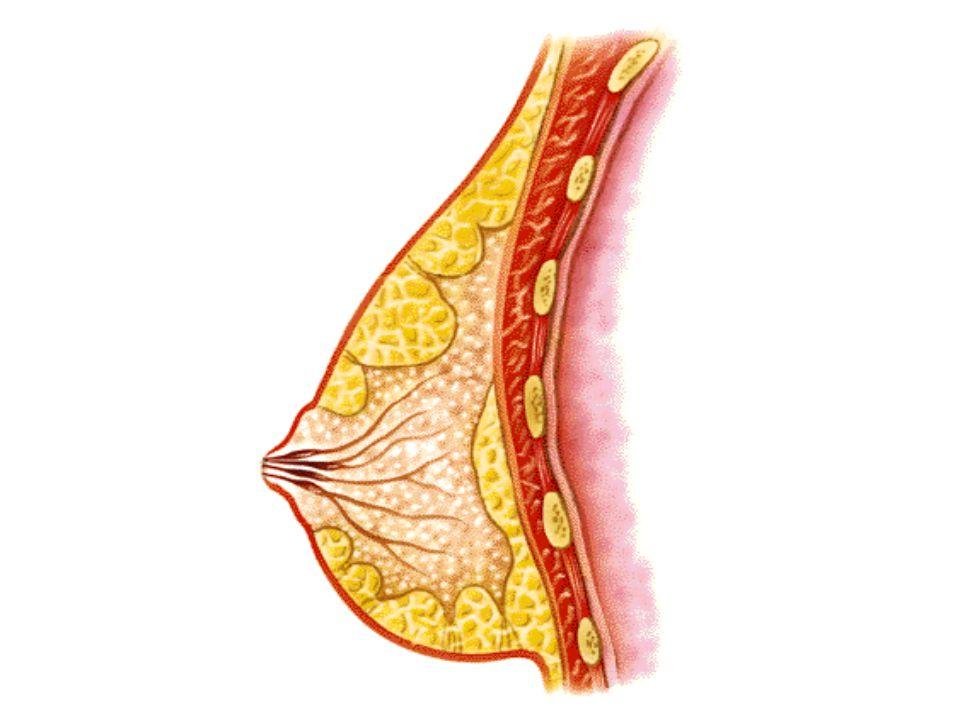 Ecografía mostrando el feto en el interior del útero