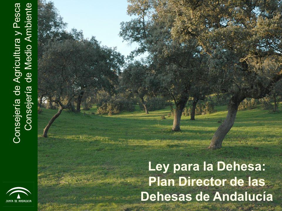 Consejería de Agricultura y Pesca Consejería de Medio Ambiente Las dehesas en la Península Ibérica se extienden a lo largo de más de 3 millones de hectáreas De esta superficie, la dehesa andaluza abarca en torno a un millón doscientas mil hectáreas (10-15% de la superficie de la Comunidad) Las dehesas andaluzas se localizan en diferentes áreas geográficas 1.Sierra Morena y Valle de los Pedroches 2.Serranías de Cádiz, Sevilla y Málaga 3.Otras manchas dispersas por toda Andalucía La Dehesa en Andalucía