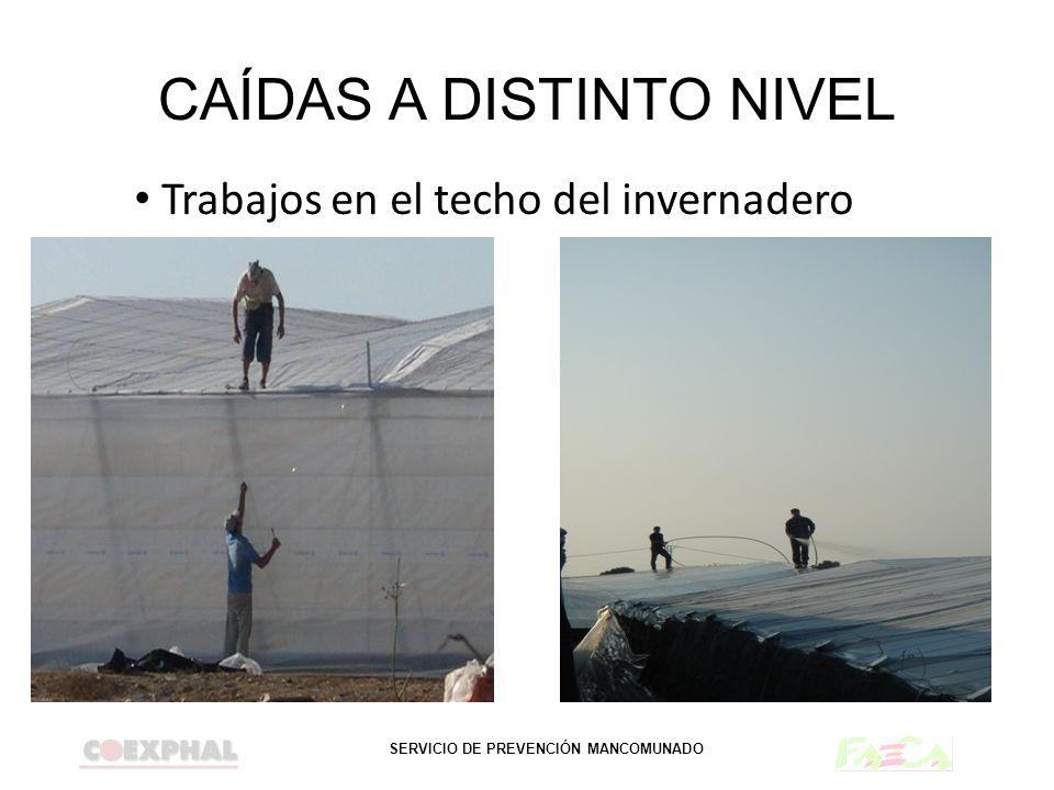 SERVICIO DE PREVENCIÓN MANCOMUNADO CAÍDAS A DISTINTO NIVEL Trabajos en el techo del invernadero