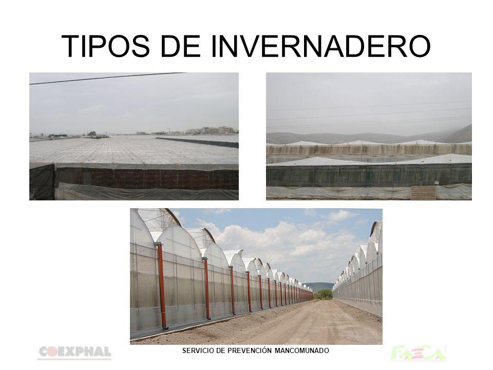 SERVICIO DE PREVENCIÓN MANCOMUNADO TIPOS DE INVERNADERO PLANO