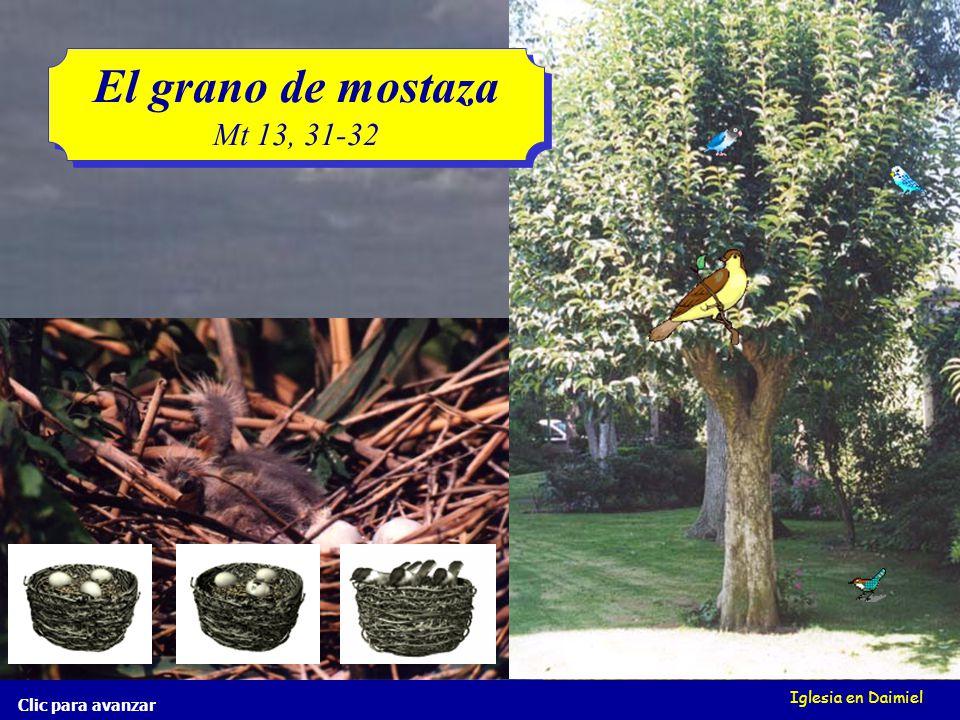 Iglesia en Daimiel El grano de mostaza Mt 13, 31-32 El grano de mostaza Mt 13, 31-32 Clic para avanzar pero cuando ha crecido, es la mayor de las hortalizas, y se hace árbol, de tal manera que vienen las aves del cielo y hacen nidos en sus ramas.