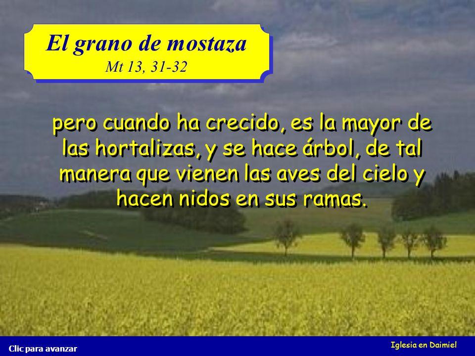 Iglesia en Daimiel El grano de mostaza Mt 13, 31-32 El grano de mostaza Mt 13, 31-32 Clic para avanzar el cual a la verdad es la más pequeña de todas las semillas; el cual a la verdad es la más pequeña de todas las semillas; El reino de los cielos es semejante al grano de mostaza, que un hombre tomó y sembró en su campo; El reino de los cielos es semejante al grano de mostaza, que un hombre tomó y sembró en su campo;