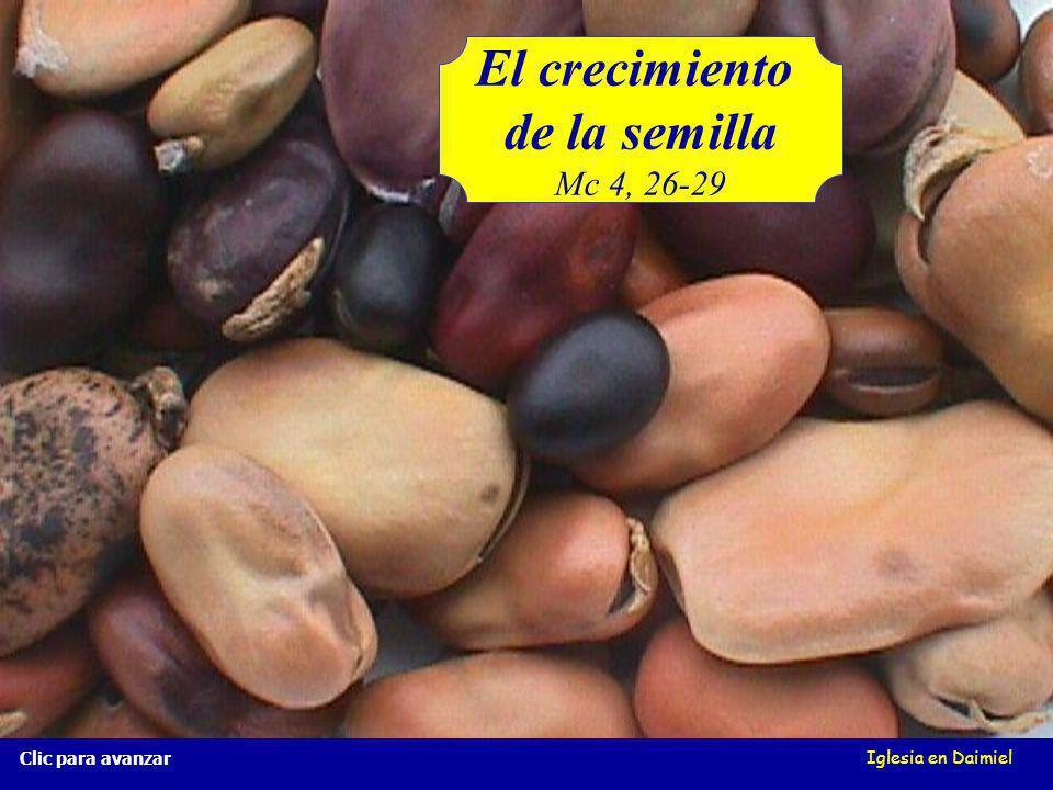 Iglesia en Daimiel El crecimiento de la semilla Mc 4, 26-29 Clic para avanzar