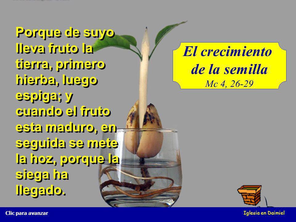 El crecimiento de la semilla Mc 4, 26-29 Iglesia en Daimiel Clic para avanzar Porque de suyo lleva fruto la tierra, primero hierba, luego espiga; y cuando el fruto esta maduro, en seguida se mete la hoz, porque la siega ha llegado.