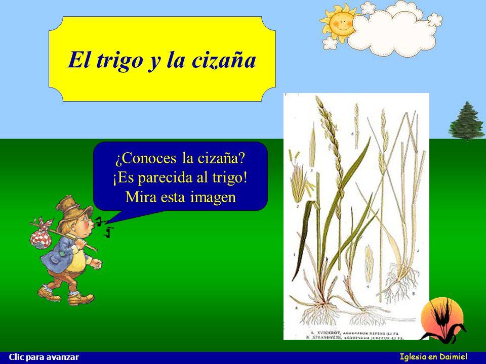 Iglesia en Daimiel El trigo y la cizaña ¿Conoces la cizaña.