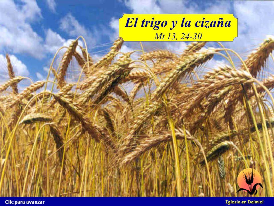 Iglesia en Daimiel El trigo y la cizaña ¿Conoces la cizaña? ¡Es parecida al trigo! Mira esta imagen Clic para avanzar