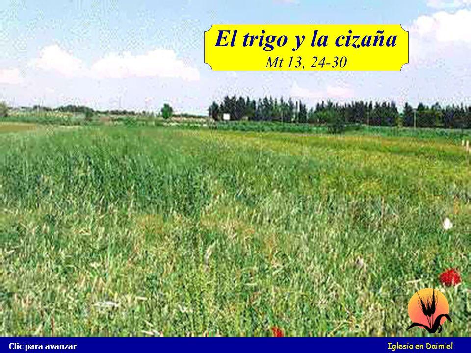 Iglesia en Daimiel El reino de los cielos es semejante al hombre que siembra buena simiente en su campo. Clic para avanzar Mas durmiendo los hombres,