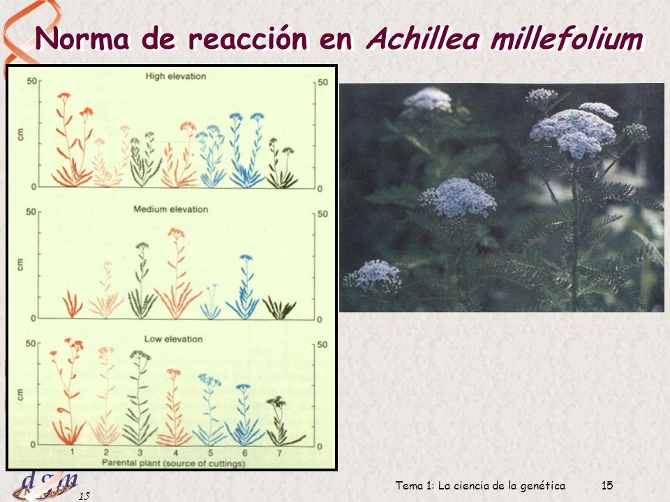 14 Dr. Antonio Barbadilla Tema 1: La ciencia de la genética14 Norma de reacción Norma de reacción: El conjunto de fenotipos que resultan de un genotip