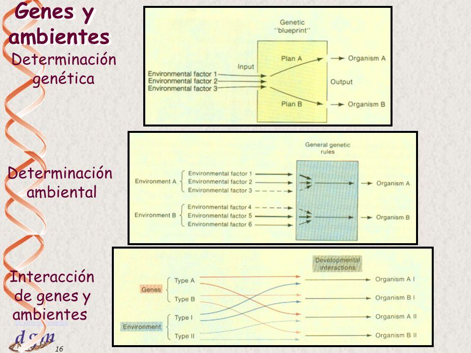 15 Dr. Antonio Barbadilla Tema 1: La ciencia de la genética15 Norma de reacción en Achillea millefolium
