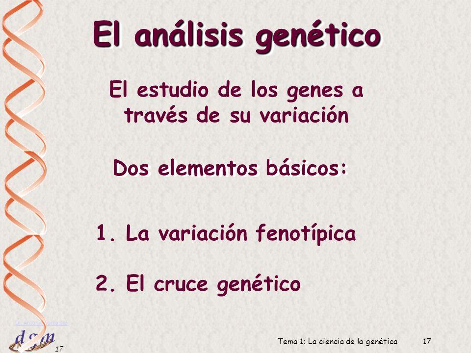 16 Dr. Antonio Barbadilla Tema 1: La ciencia de la genética16 Genes y ambientes Genes y ambientes Determinación genética Determinación ambiental Inter