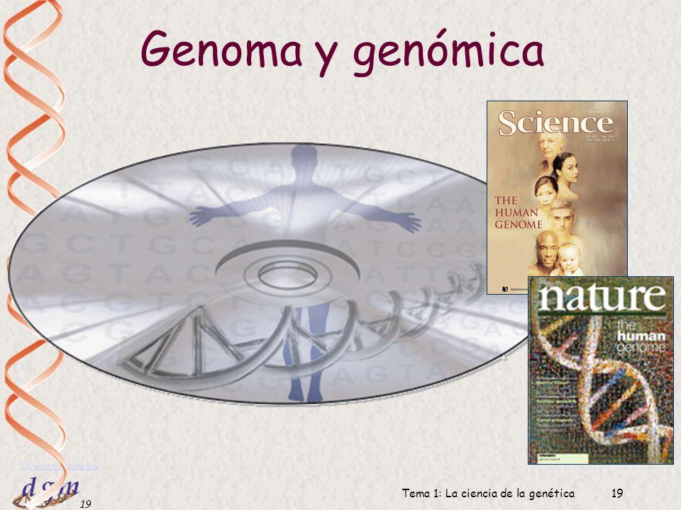 18 Dr. Antonio Barbadilla Tema 1: La ciencia de la genética18 Áreas principales de la genética Genética clásica: transmisión y localización de los gen