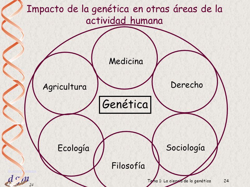 23 Dr. Antonio Barbadilla Tema 1: La ciencia de la genética23 Organismos modelos de la Genética Fagos (virus bacterianos) Escherichia coli (bacteria d