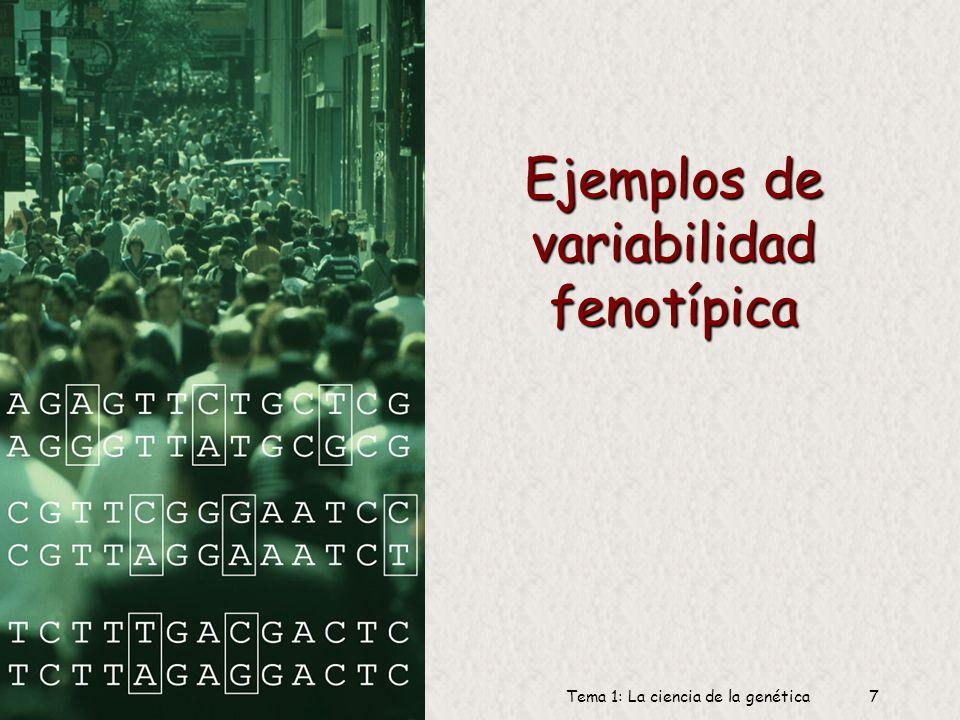 6 Dr. Antonio Barbadilla Tema 1: La ciencia de la genética6 Fenotipo y genotipo Genotipo: Los factores hereditarios internos de un organismo, su genes