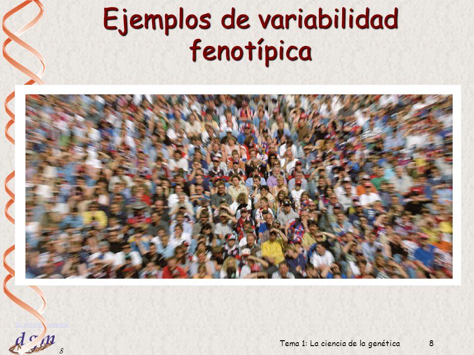 8 Dr. Antonio Barbadilla Tema 1: La ciencia de la genética8 Ejemplos de variabilidad fenotípica