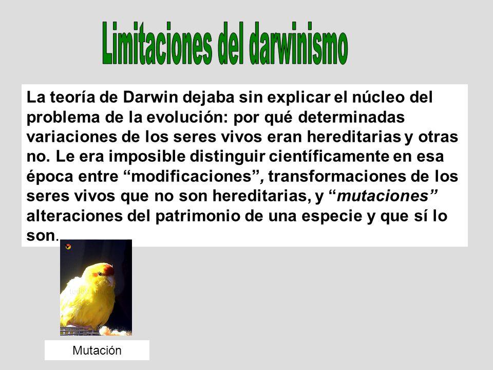 La teoría de Darwin dejaba sin explicar el núcleo del problema de la evolución: por qué determinadas variaciones de los seres vivos eran hereditarias