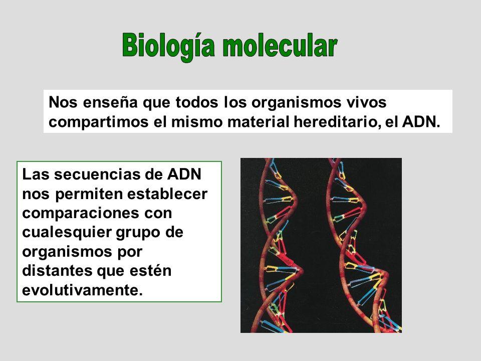 Nos enseña que todos los organismos vivos compartimos el mismo material hereditario, el ADN. Las secuencias de ADN nos permiten establecer comparacion