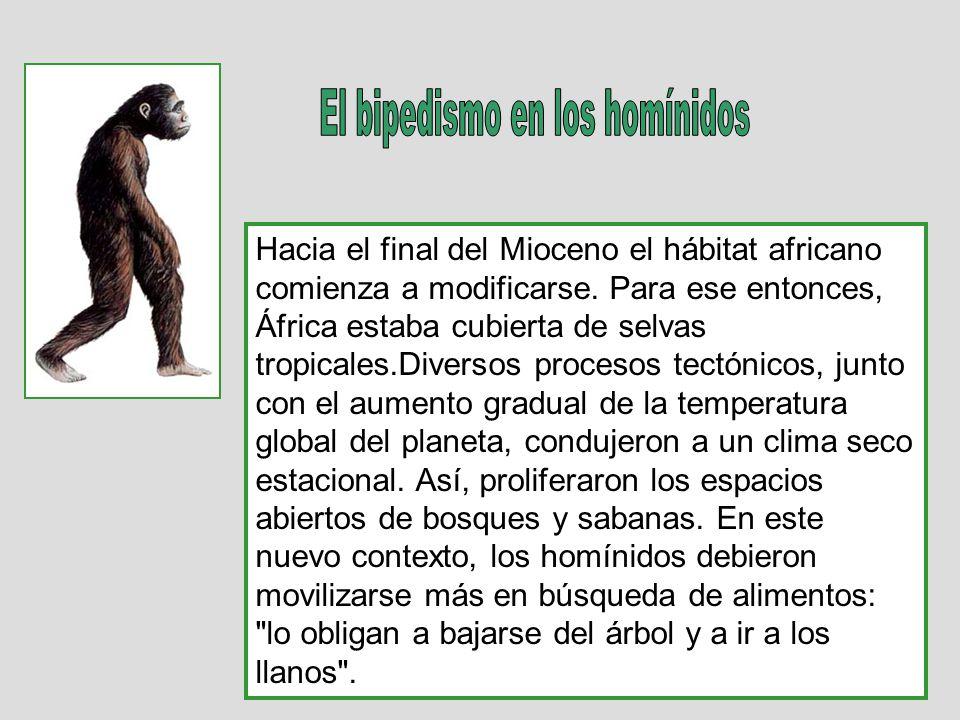 Hacia el final del Mioceno el hábitat africano comienza a modificarse. Para ese entonces, África estaba cubierta de selvas tropicales.Diversos proceso