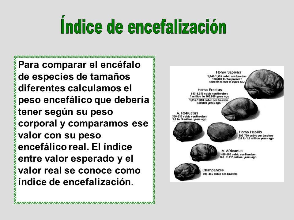 Para comparar el encéfalo de especies de tamaños diferentes calculamos el peso encefálico que debería tener según su peso corporal y comparamos ese valor con su peso encefálico real.