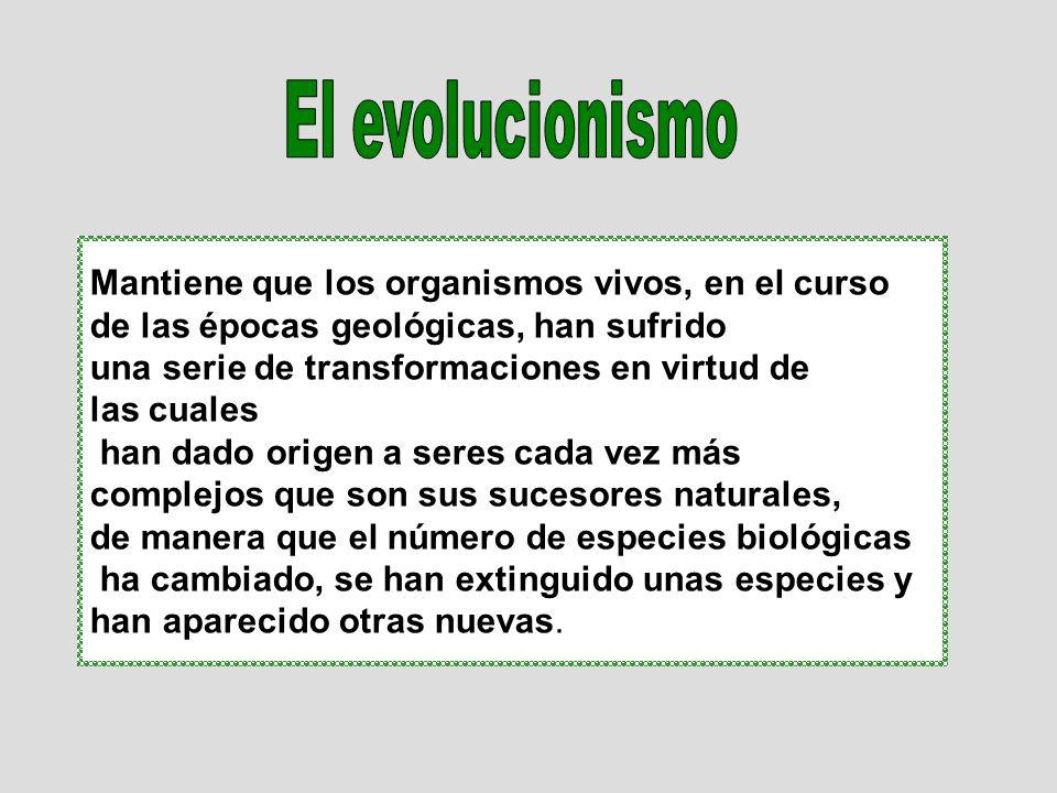 Las evidencias del hecho de la evolución las tenemos en dos escalas diferentes: MACROEVOLUCIÓNMICROEVOLUCIÓN REGISTROS FÓSILES BIOLOGÍA MOLECULAR Podemos tener evidencias de la micro evolución en la selección artificial de especies, efectuada por el hombre con fines productivos.