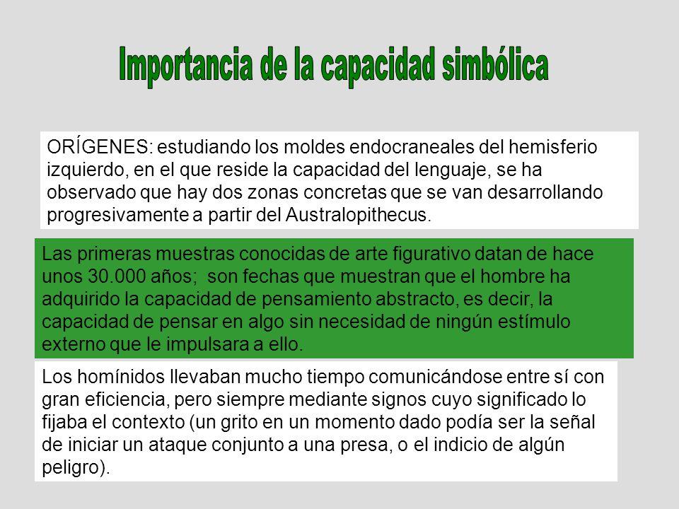 ORÍGENES: estudiando los moldes endocraneales del hemisferio izquierdo, en el que reside la capacidad del lenguaje, se ha observado que hay dos zonas