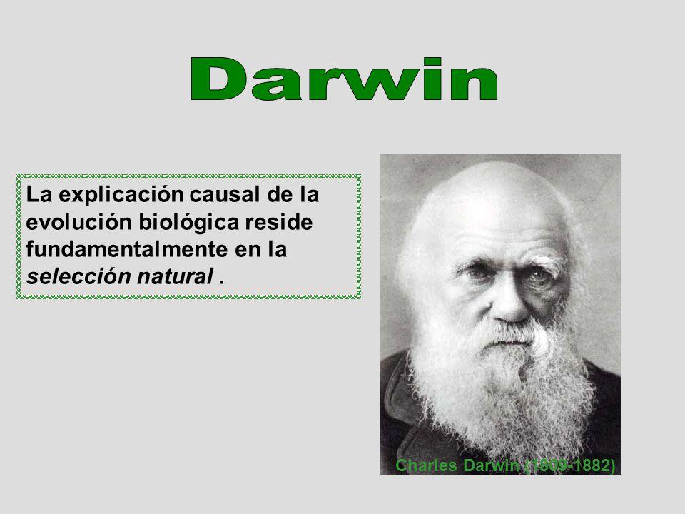 La explicación causal de la evolución biológica reside fundamentalmente en la selección natural. Charles Darwin (1809-1882)