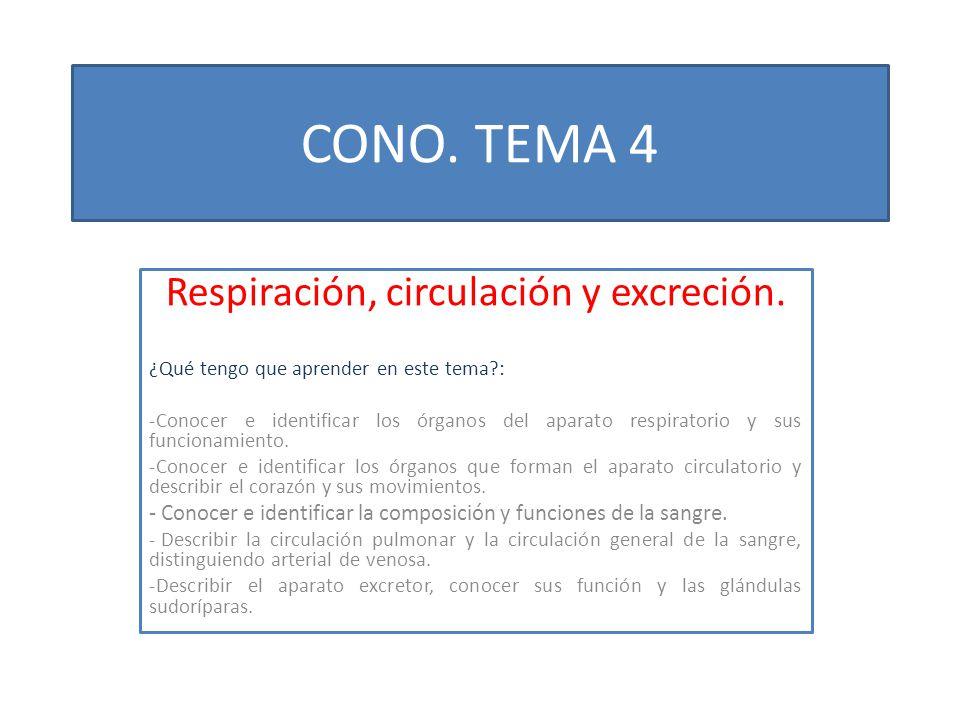 CONO. TEMA 4 Respiración, circulación y excreción. ¿Qué tengo que aprender en este tema?: -Conocer e identificar los órganos del aparato respiratorio
